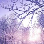 冬日暖阳<mgzn-conten